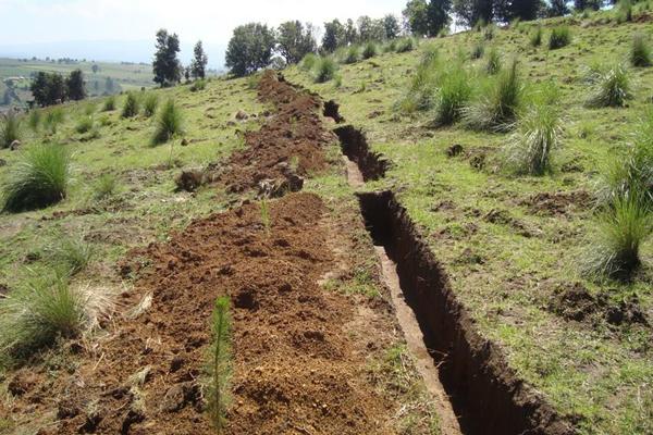 Zanjas bordo más reforestación