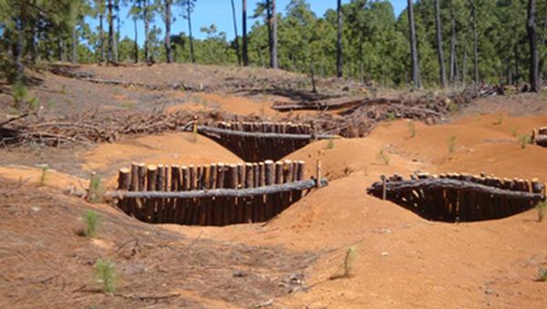 Presas de morillos más reforestación