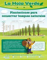 Plantaciones-para-conservar-bosques-naturales