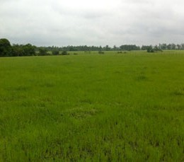 Agro-UUMBAL-Interior-1