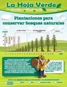 Plantaciones_forestales_MINIATURA