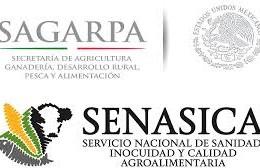 Sagarpa y Senasica