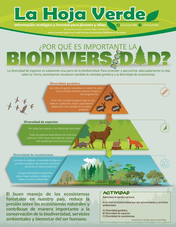 Biodiversidad I