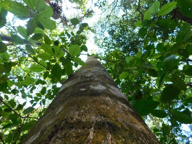 Perspectiva forestal 2