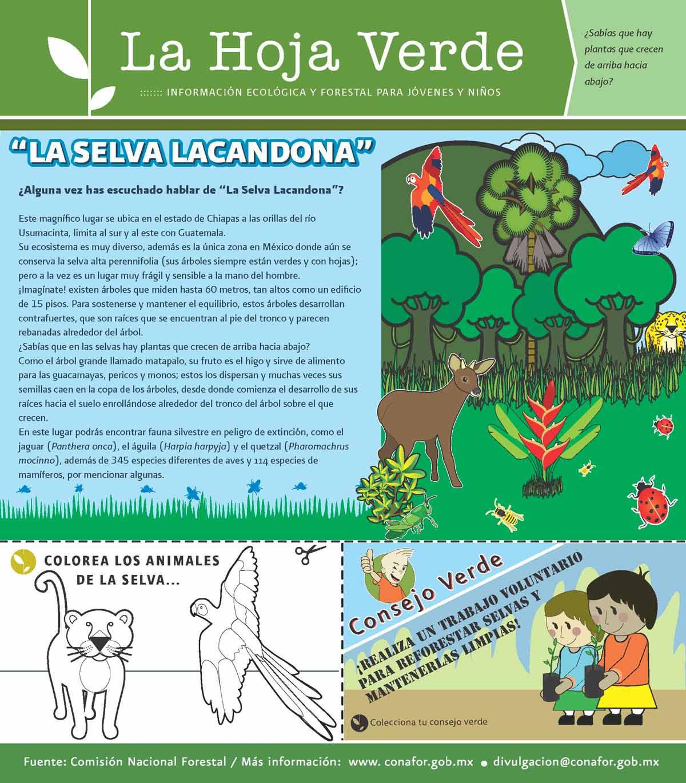 Best Animales De La Selva Lacandona Para Colorear Image Collection